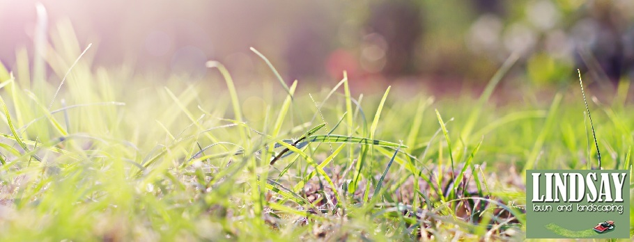 Raleigh Landscaping | Raleigh Lawn Care